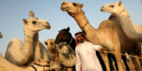 Camel Ride to the Pyramids 30 Cool Things For Successful Entrepreneurs To Do