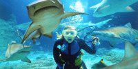 Swimming with sharks 30 Cool Things For Successful Entrepreneurs To Do