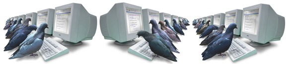 pigeon rank Google Follows These 8 Simple Rules (and So Should You)